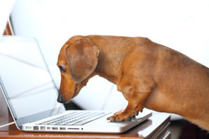 A dog looking at a notebook computer screen